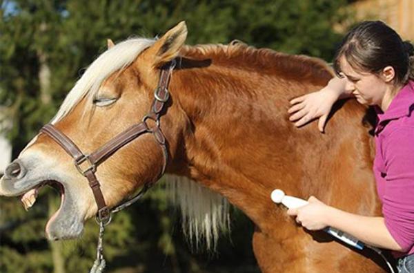 Neurostim für Tierheilpraktiker
